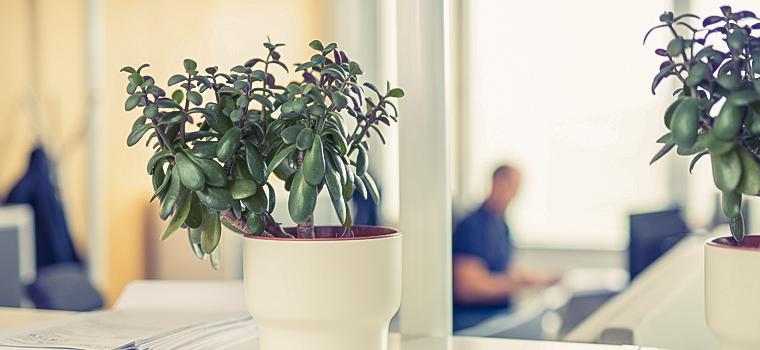 Viherkasveja toimiston pöydällä.